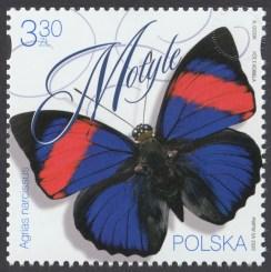 Motyle - 5090