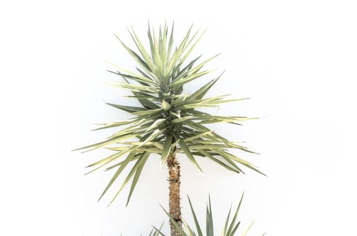 Succulent plant, Costa del Sol (1:1 also available)
