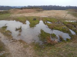 A temporary (?) wetland at Woodside Quarry