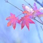 一眼レフ初心者が望遠で撮ってみた紅葉の写真