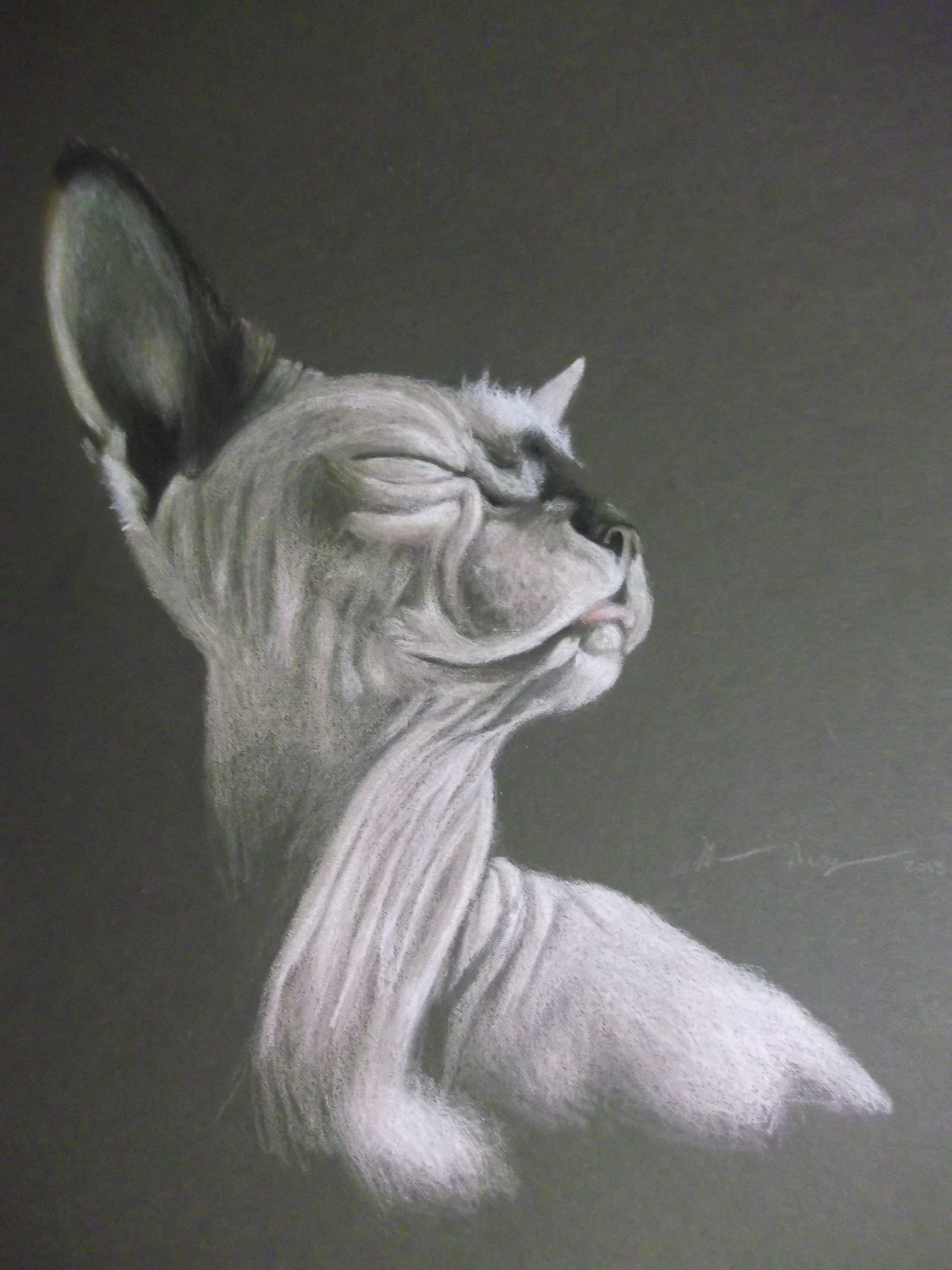 Dottie the Sphynx - Colored Pencil Drawing by Katherine Augade