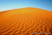 06-100km del sahara biben fotos (7)
