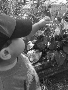 beej and flower bw