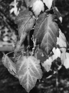 bw-leaves