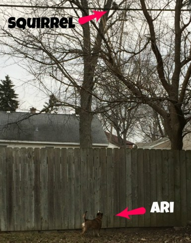 ari-squirrel