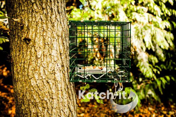 Squirrel MK4 Fenn Cage