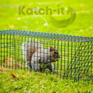Squirrel Trap