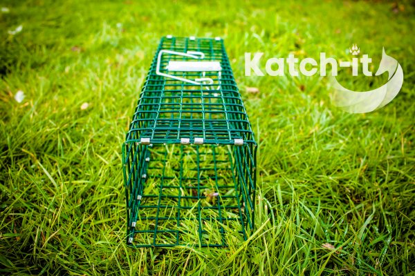 Rat Trap live catch