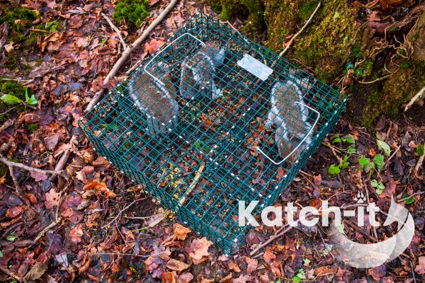 multi catch squirrel trap