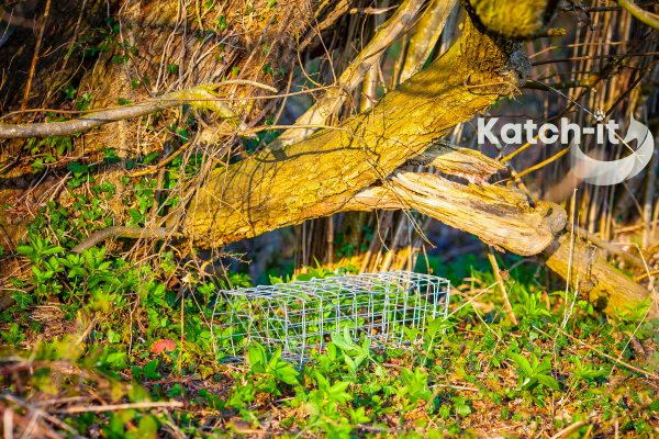 squirrel trap by katchit