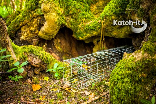 A Picture of Multi-catch Compact Squirrel Trap by Katch-it