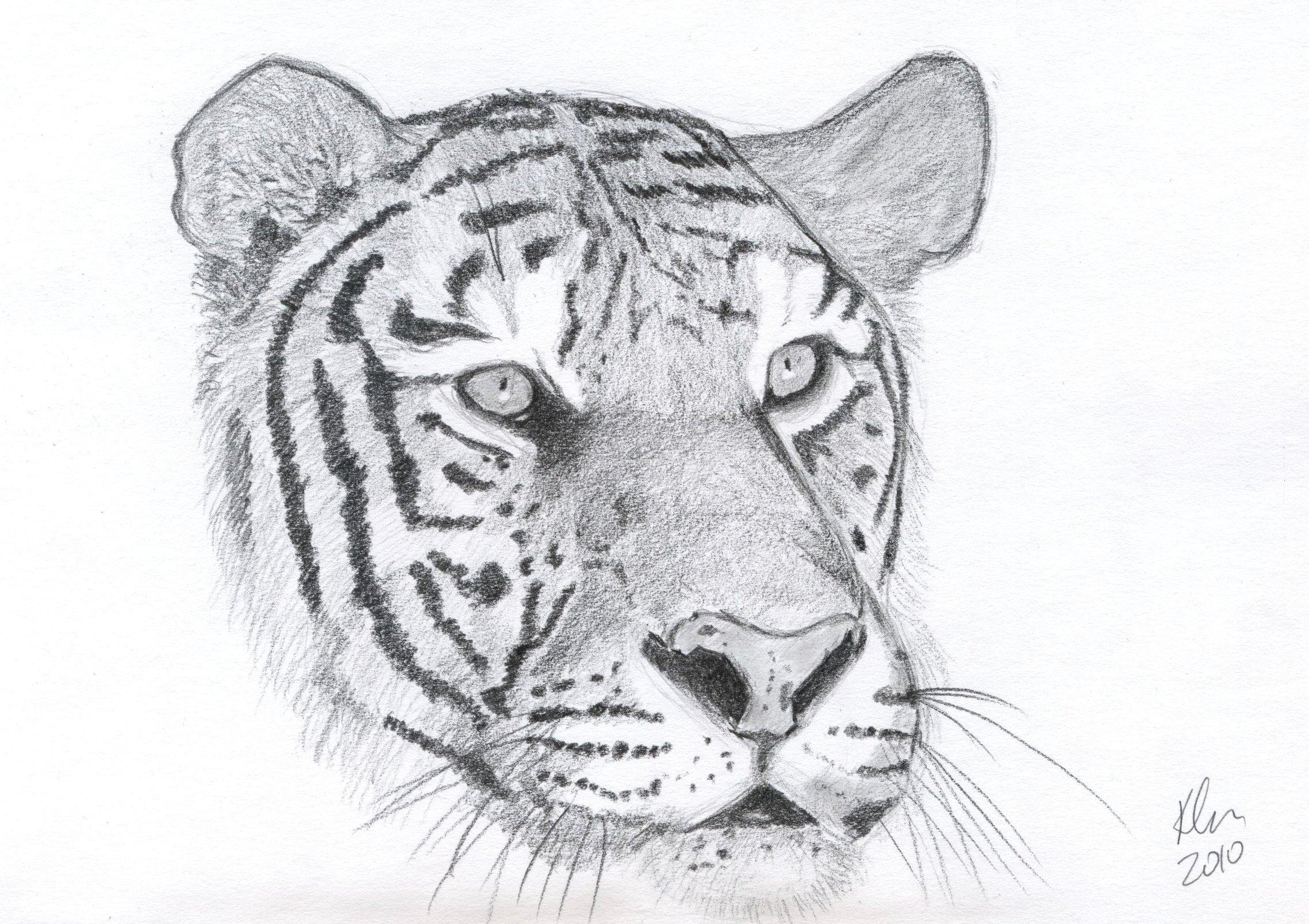 Image of: Easy The Proportions Kates Art Corner Wordpresscom Animal Kates Art Corner
