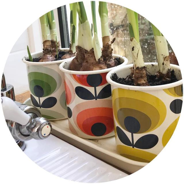My new orlakiely planters sitting on my window sill makehellip