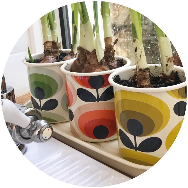 My new orlakiely planters sitting on my window sill makehellip
