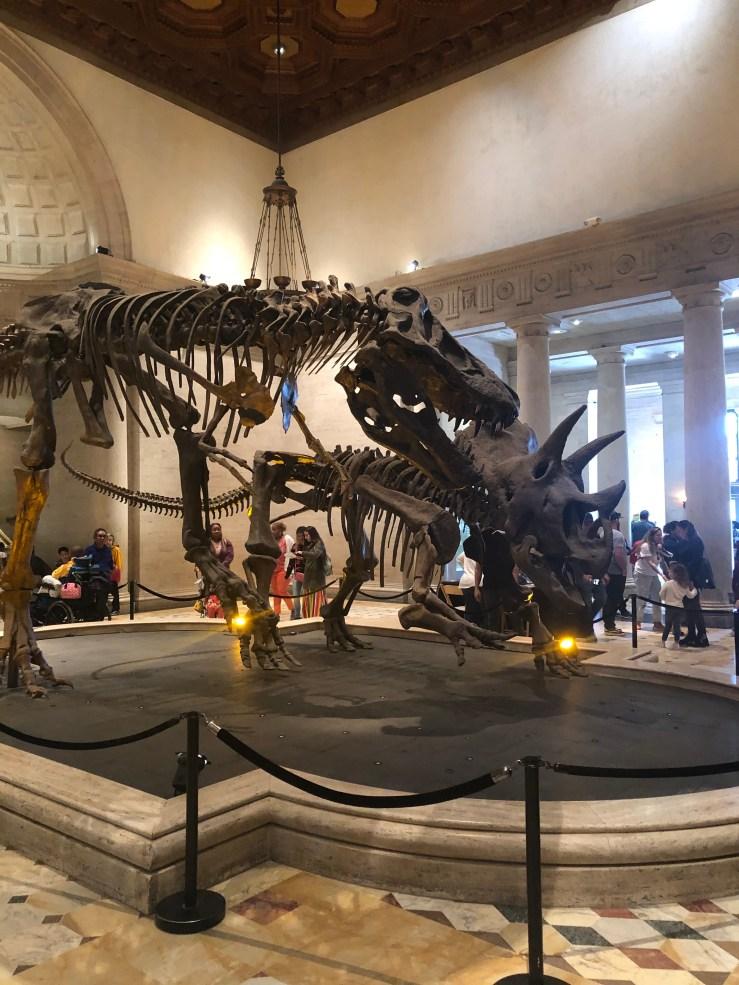 T-Rex vs. Triceratops