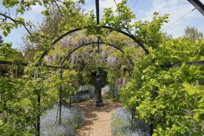 Photo of michelham priory wisteria