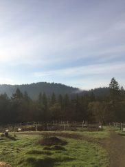View of wooded hills in Corvallis, Oregon