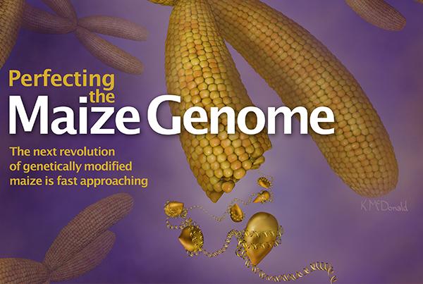 Maize Genome