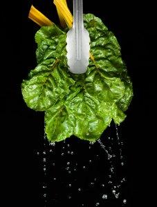 vegetable, healthy food, spinach, rainbow chard