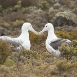 kate mccombie, photographer, melbourne, sub-antarctic,