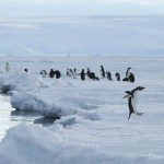 antarctica, kate mccombie, melbourne, penguins