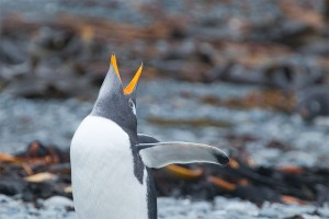 kate mccombie, photographer, melbourne, sub-antarctic, Macquarie Island