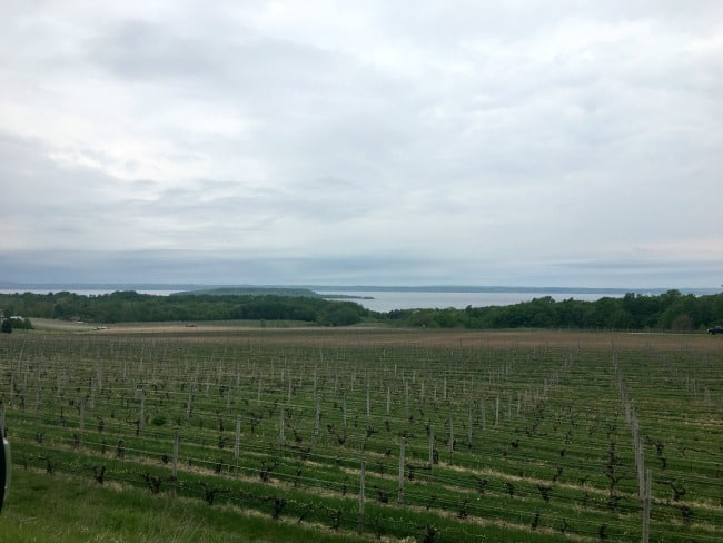 vineyard traverse city
