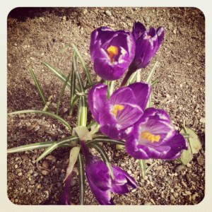 Spring is in the air (Photography by Kate Neschke)