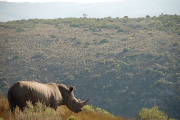 Rhino Conservation (again)