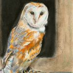 Owl art by Kate on Conservation
