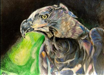 Eagle art by Kate on Conservation