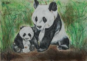 Panda art by Kate on Conservation