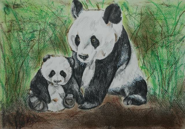 Panda art by Kate on Conservation