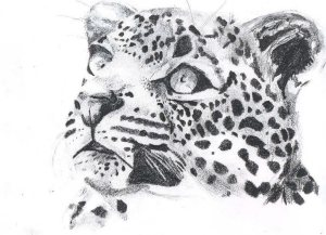 Wildlife art by Kate on Conservation