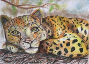 Art by Kate on Conservation - color pencil