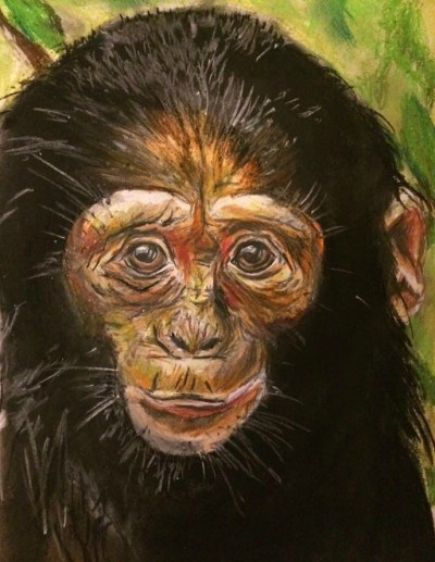 Chimp by Kate on Conservation