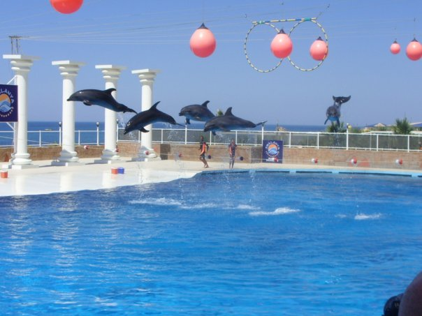 Dolphins in captivity performing for the general public