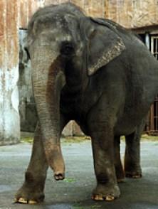 180-mali-elephant