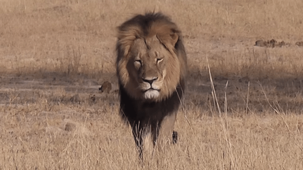 Cecil the Lion, Africa