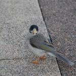 Bird and wildlife photography