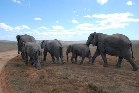 Elephant's Journey, photograph by Kate Snowdon
