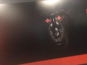 Wildlife photographer gorilla