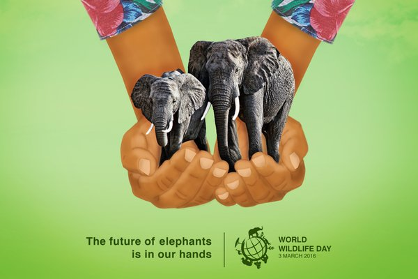 World Wildlife Day elephants
