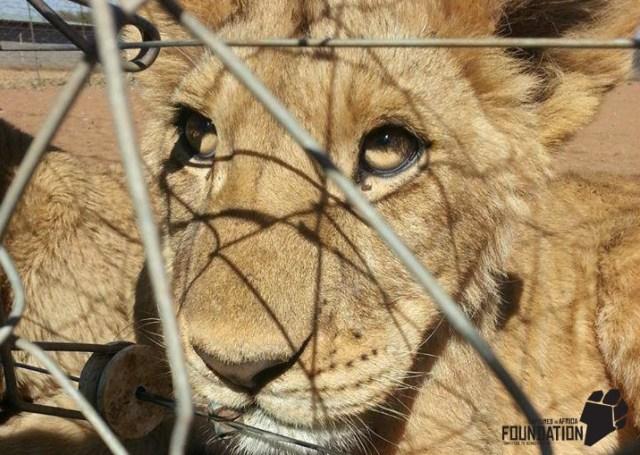© Drew Abrahamson / www.capturedinafrica.com