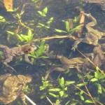 Starning wildlife Norfolk