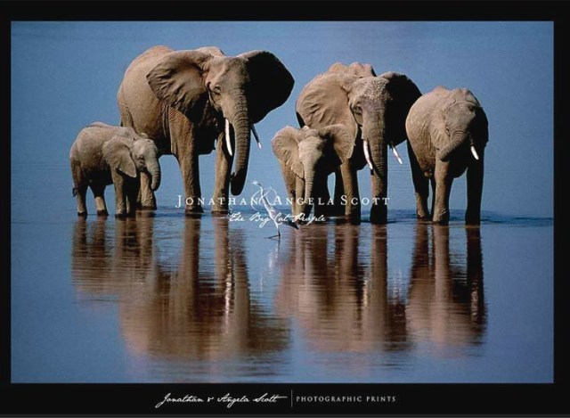Angela Scott's photograph, which won Wildlife Photographer of the Year 2002