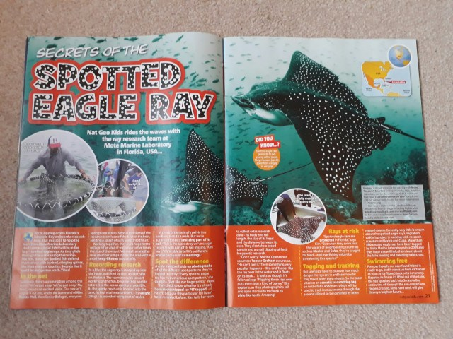 Spotted eagle ray feature in nat geo kids magazine