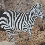 zebra by Omra Sian