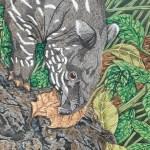 tapir calf by Omra Sian