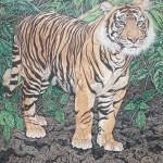 sumatran tiger close up by Omra Sian